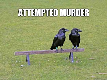 attempted_murder